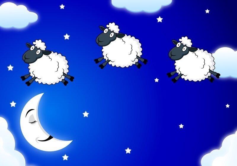 Раз овечка, два овечка: почему считают именно этих животных?