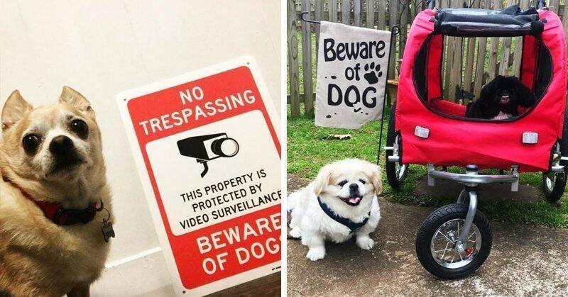 20 ситуаций, когда табличка «Осторожно, злая собака» нагло обманывала всех вокруг