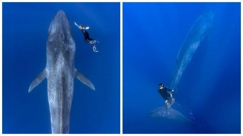 Дайвер столкнулся с 30-метровым синим китом