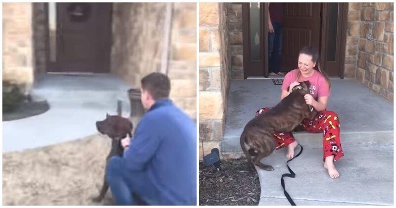 Девушка не смогла сдержать слез, увидев подаренную ей собаку