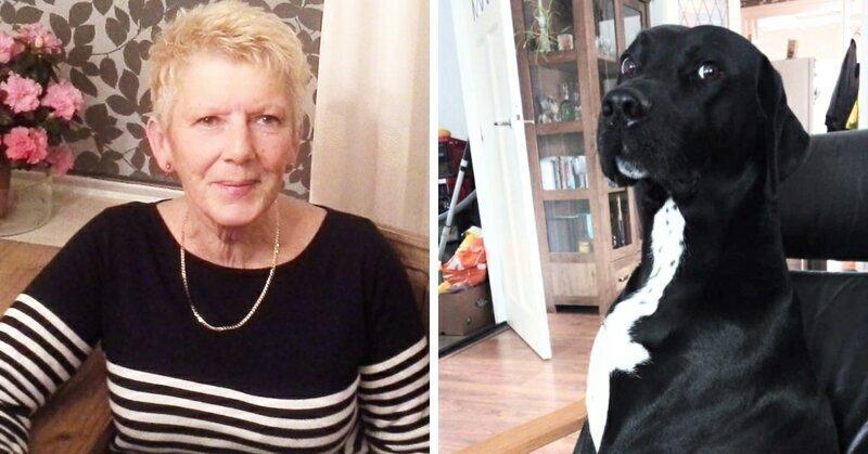 Собака-хакер удалила сотни постов на Facebook и одурачила пенсионерку