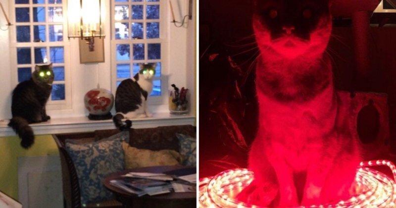 15 фотодоказательств: коты-инопланетяне давно среди нас