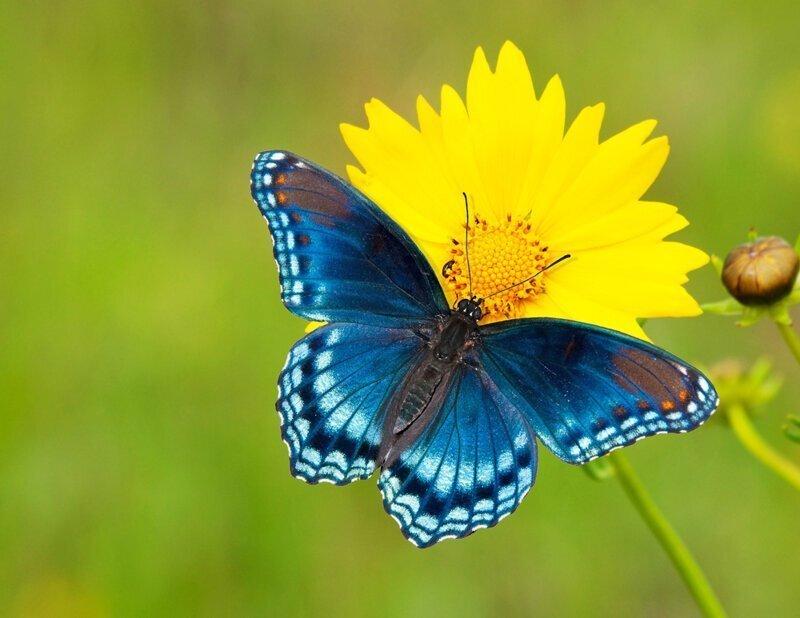 Отмена полета: почему бабочки не могут порхать во время землетрясения?