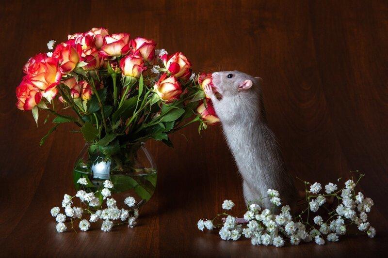 Почему пахнут цветы?