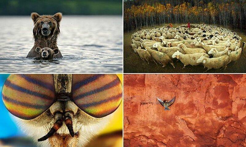 Потрясающие снимки с фотоконкурса Cewe Photo Award