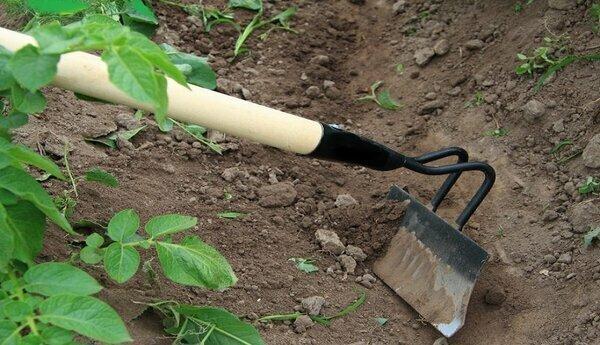 Какие растения нельзя окучивать, или останетесь без урожая