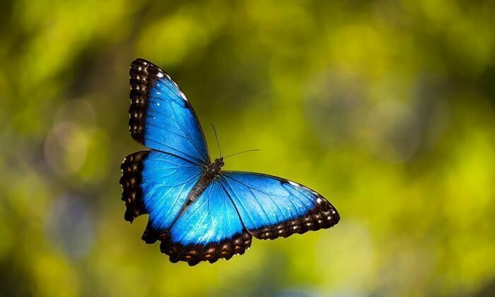 Пестрый мир бабочек