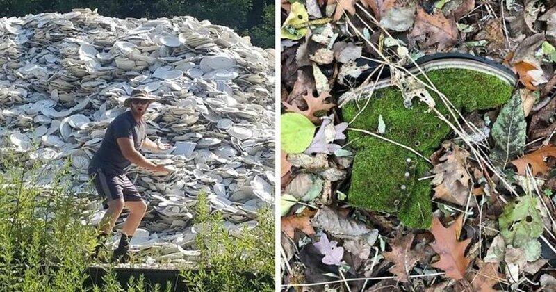 50 любопытных находок, сделанных в лесу