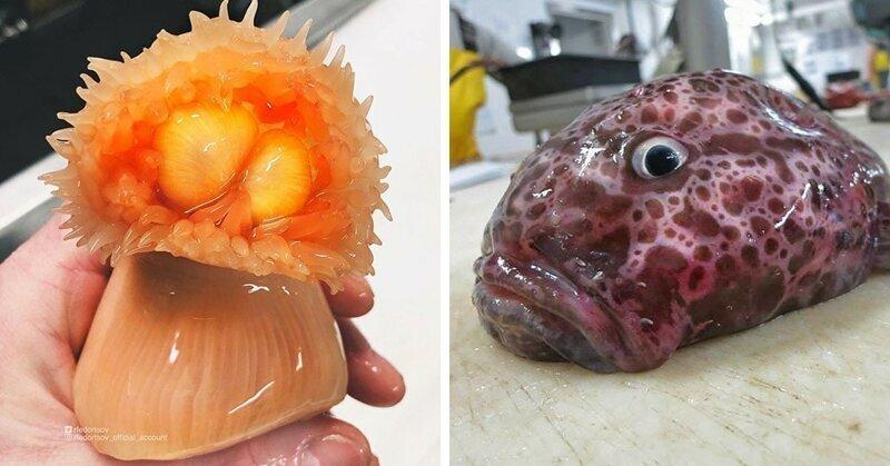 18 жутких обитателей морских глубин от Романа Федорцова — нашего любимого мурманского рыбака