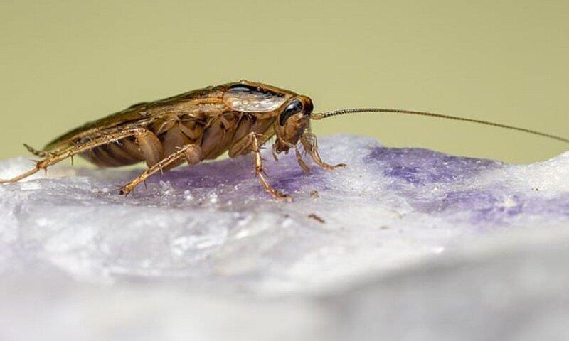 Берегись: тараканы превращаются в монстров!