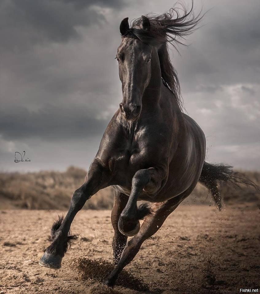 Хорошая лошадь слушается даже тени всадника