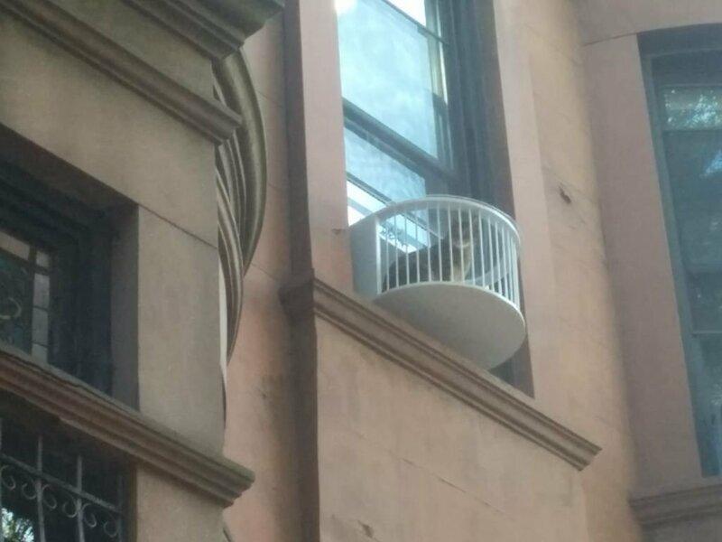 Балкон для семейства кошачьих