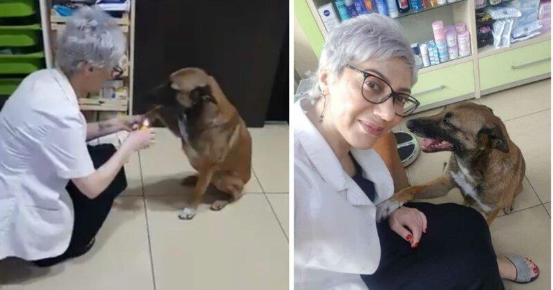 Умная бродячая собака обратилась в аптеку за помощью