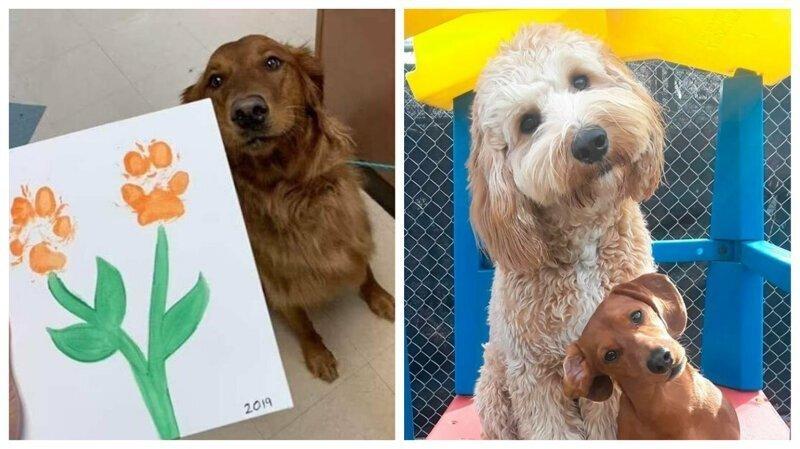 50 фотографий, которые призваны восполнить недостаток собак в вашей жизни