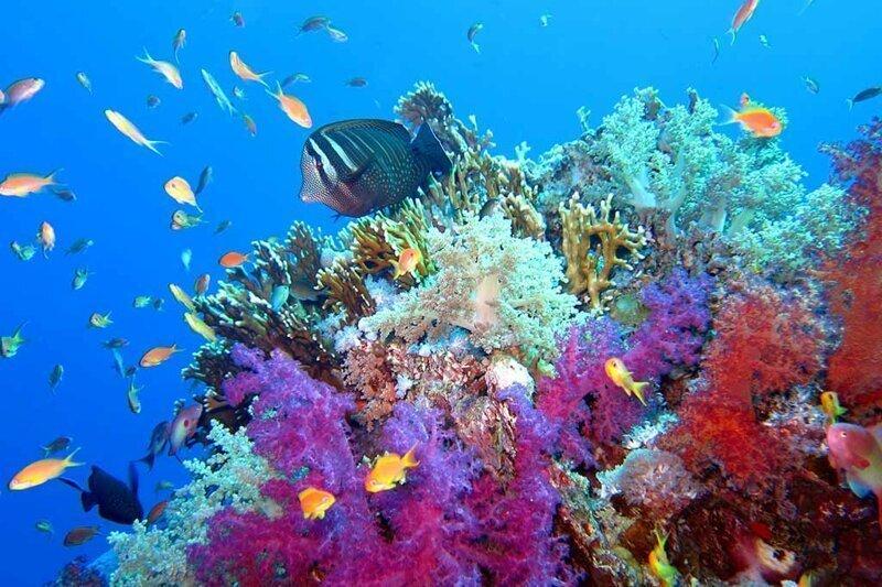 Египетская мекка дайверов, Красное море, Голубая дыра