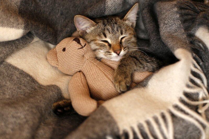Почему нельзя спать с игрушками?
