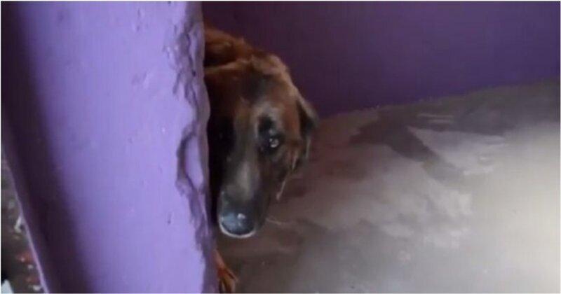 Первый дружеский контакт волонтеров с псом, которого почти всю жизнь продержали на цепи