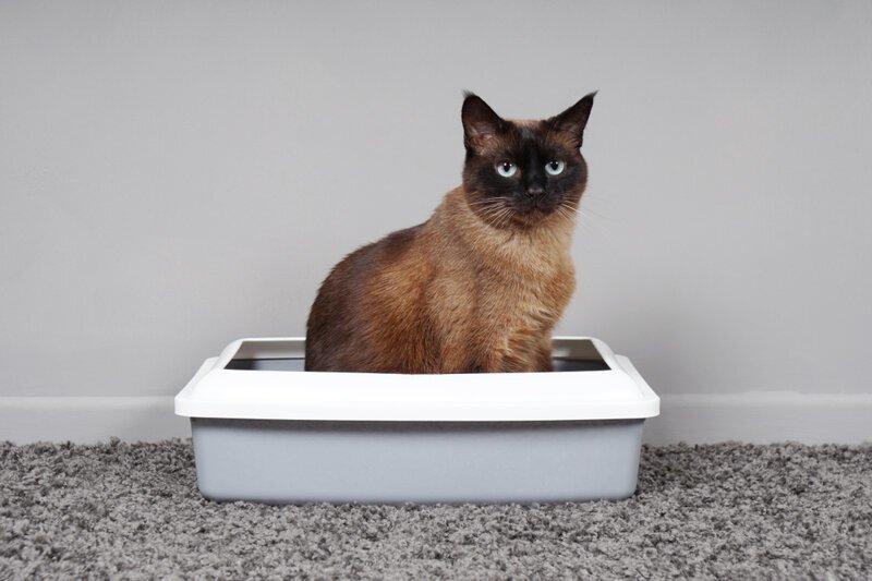 Можно ли смывать в унитаз наполнитель кошачьих лотков?
