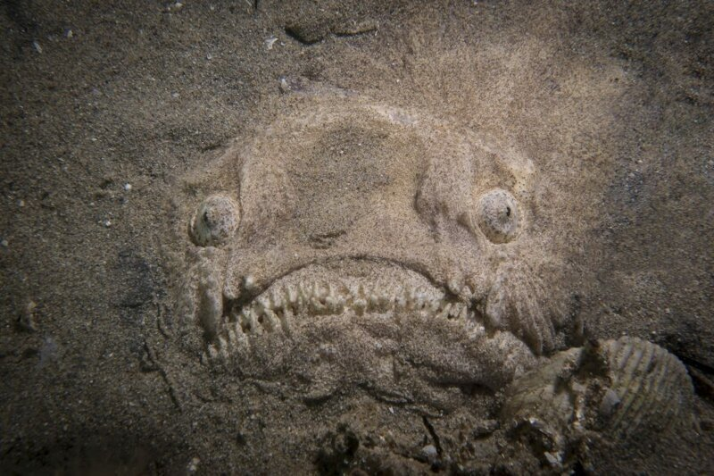 Чудище из морских глубин