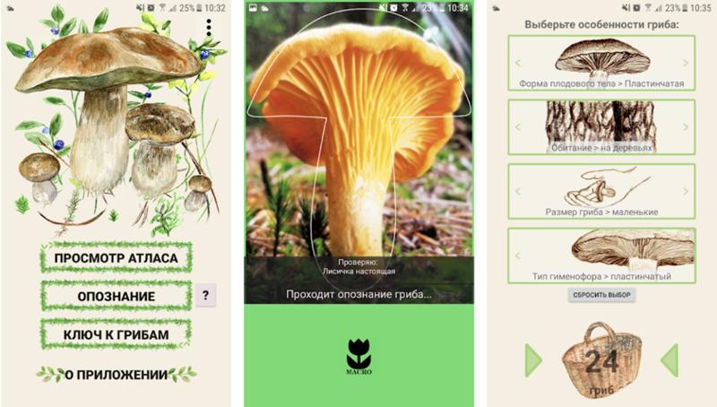 6 самых необычных способов искать грибы