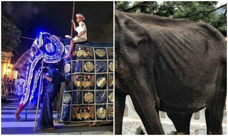 На это больно смотреть: печальная изнанка ярких фестивалей со слонами