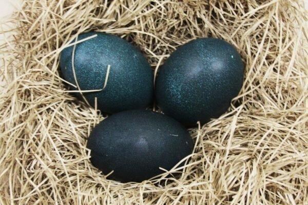 Фермер нашел странные яйца – вот, что вылупилось