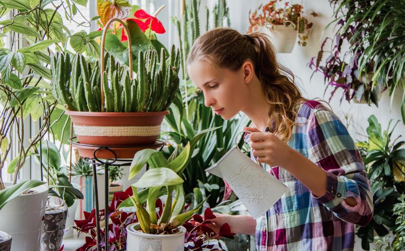 Основные правила по уходу за растениями
