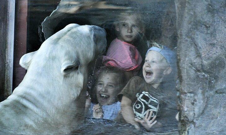 У сотрудников Ленинградского зоопарка накипело, и они опубликовали отрезвляющий пост