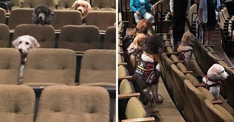 Служебных собак привели в театр на спецзадание