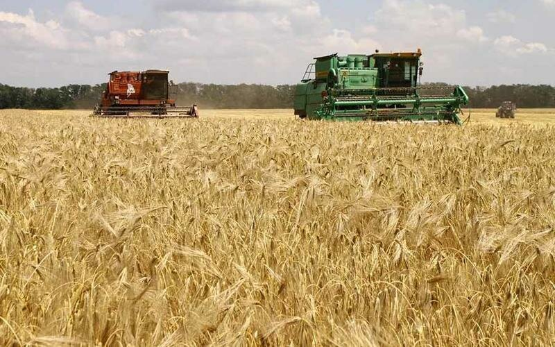 В России богатый урожай высококачественной пшеницы