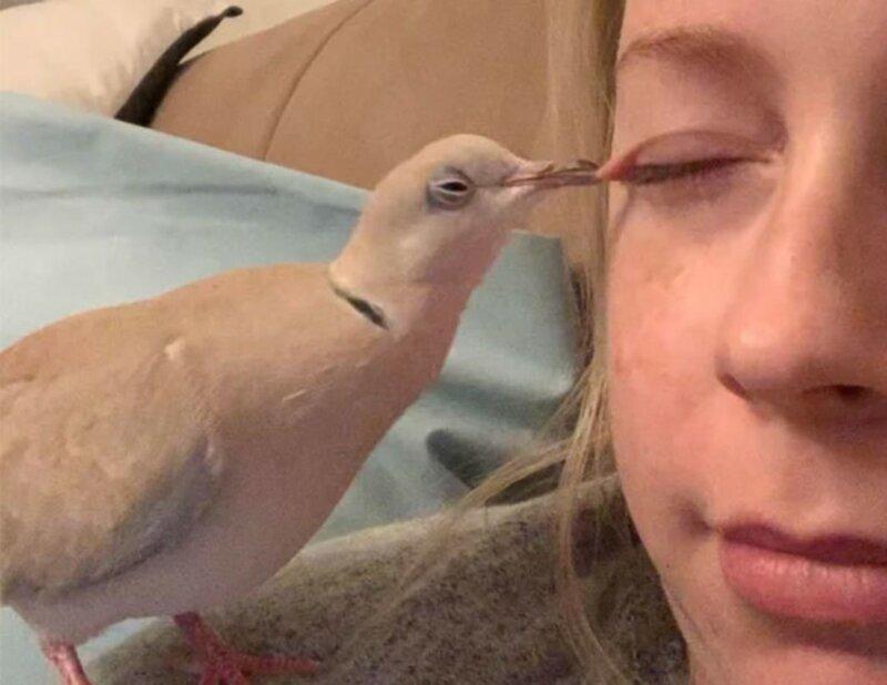 Восстание пернатых: 30 фото птиц, которые всей душой ненавидят людей