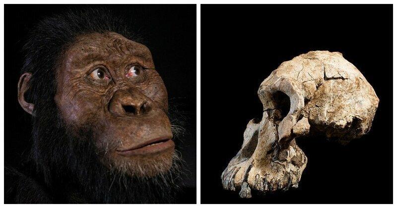 Ученые показали лицо древнейшего предка человека, жившего более 4 млн лет назад