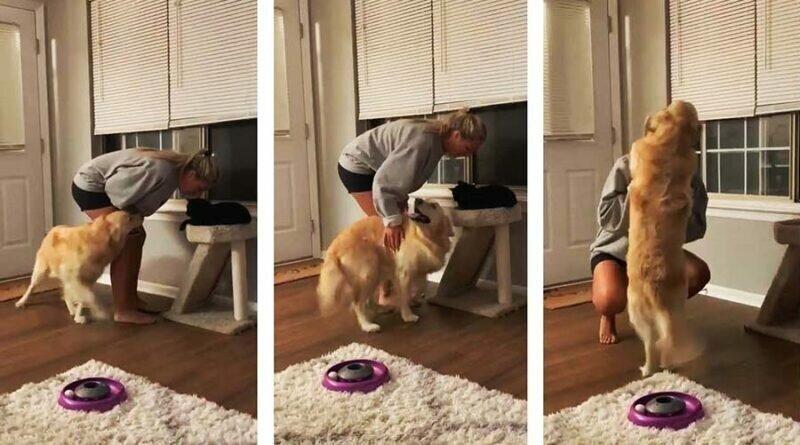 Зачем тебе эта кошка? Ревнивая собака требует от хозяйки внимания