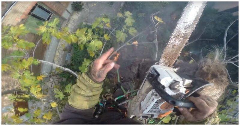 Пилить пальму бензопилой было далеко не лучшей идеей