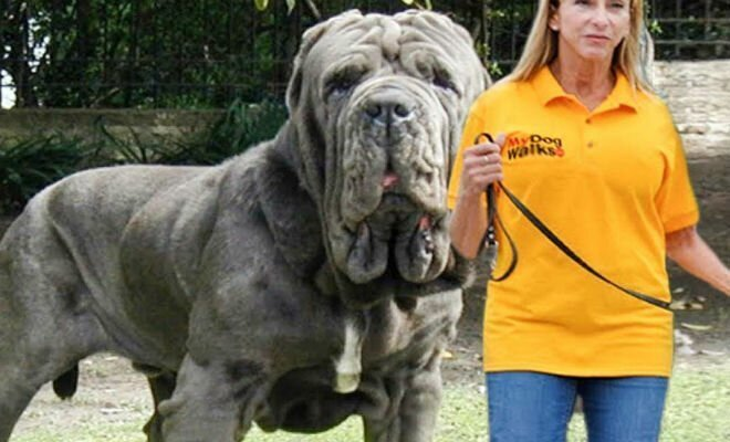 10 самых редких пород собак в мире