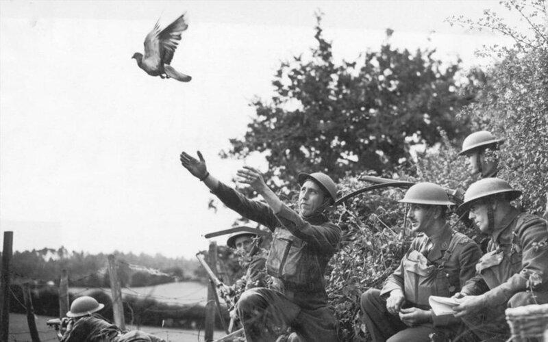 Почему почтовые голуби летят в нужное место