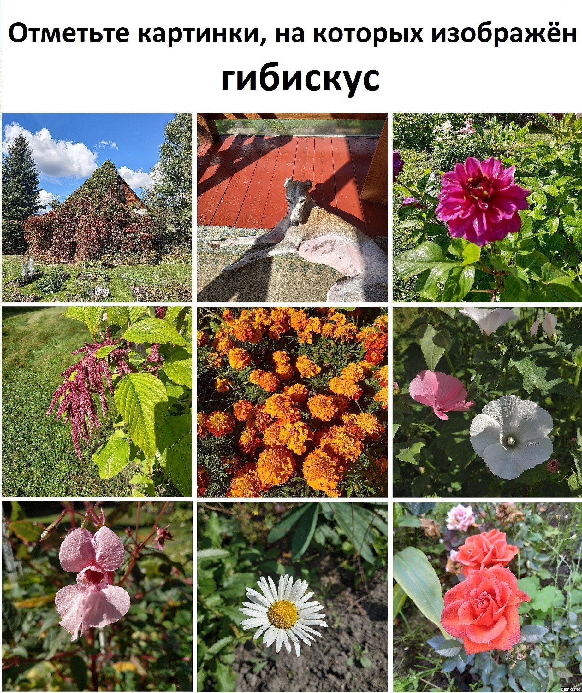 Был сегодня на даче, фотографировал какие-то цветы