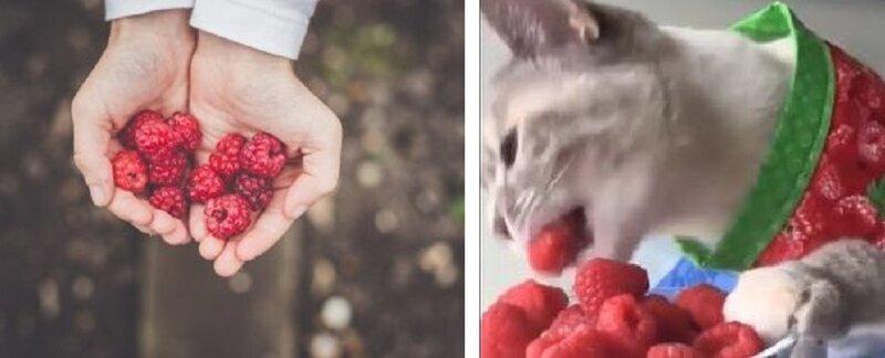 Какой вред от малины и малинового варенья?