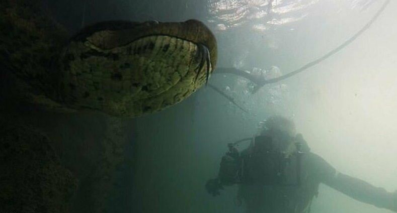 Дайвер обнаружил на дне реки 7-метровую огромную анаконду – дикие кадры