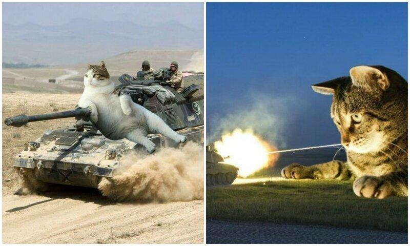 Нет войне, да - котикам: фотошопер соединяет гигантских котов и военную технику