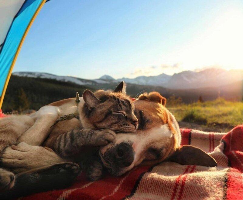 20 душевных фотографий о доброте и любви