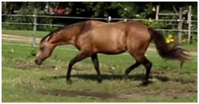 Конь пустился в погоню за бабочкой