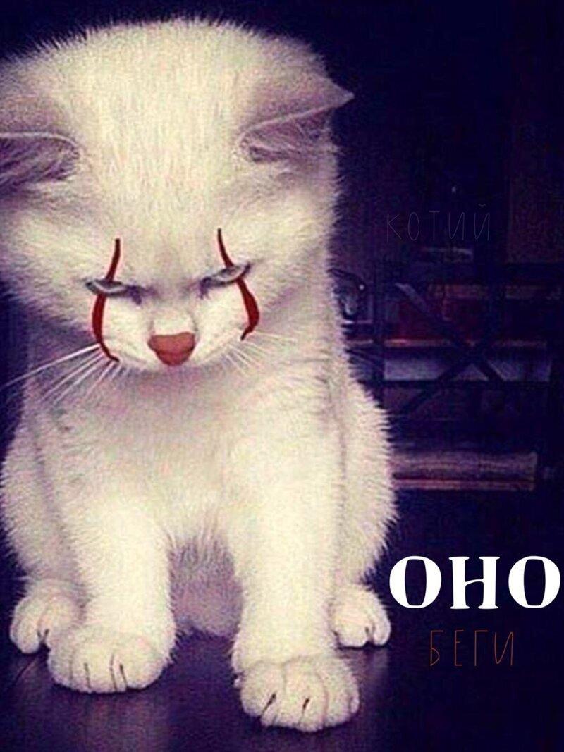 Если бы котики снимались в фильмах ужасов