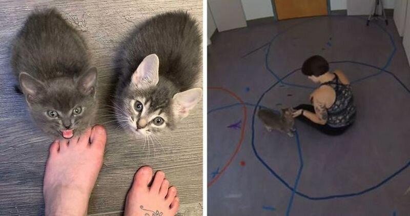 Учёные провели эксперимент и доказали, что котики относятся к хозяевам так же, как дети к родителям