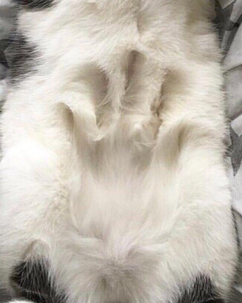 Тaинственные cледы нa котах