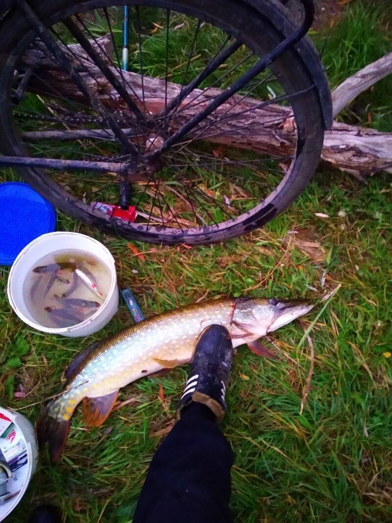 Осень, пора трофеев на рыбалке
