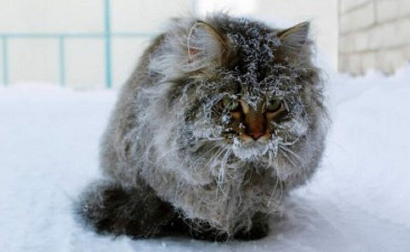 Как помочь перезимовать бездомной кошке?