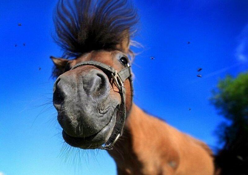 В Нижнем Новгороде безумный сосед изводит людей записью лошадиного ржания