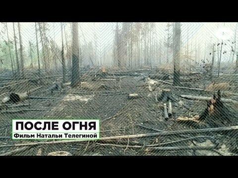 После огня. Фильм-расследование о причинах аномальных пожаров в сибирской тайге