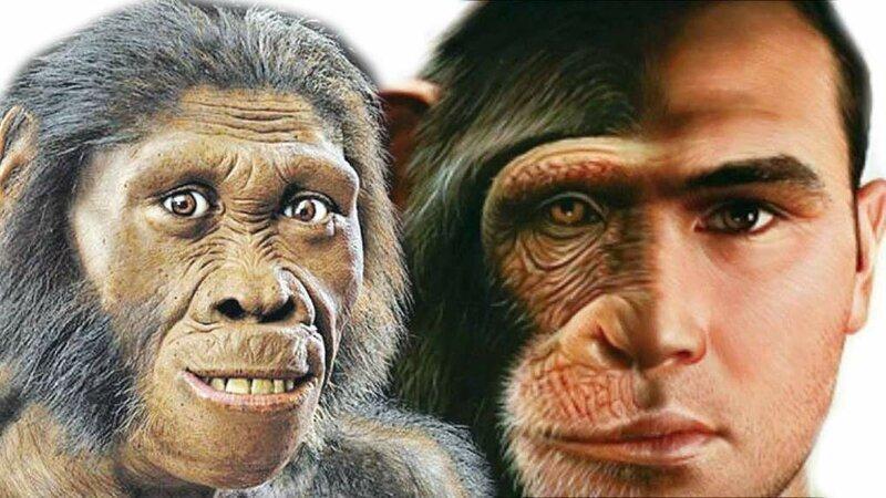 Загадки эволюции: почему не эволюционируют современные обезьяны?